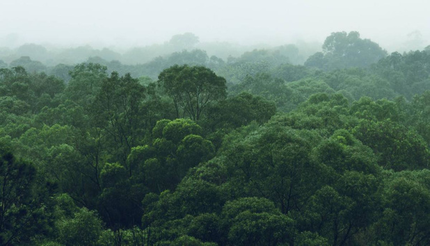 Mens en AI strijden samen tegen ontbossing in het Amazonewoud