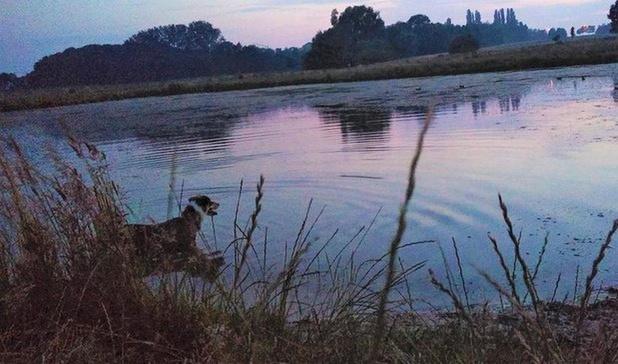 Plannen voor hondenzwemvijver in Kortrijk lopen wat vertraging op