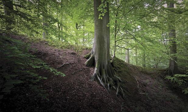 Vivre près d'une forêt est bénéfique pour la santé mentale des jeunes