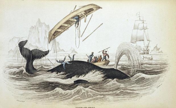 Walvissengeheugen
