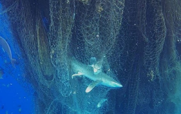 "En mer Baltique, la traque des filets de pêche ""fantômes"""