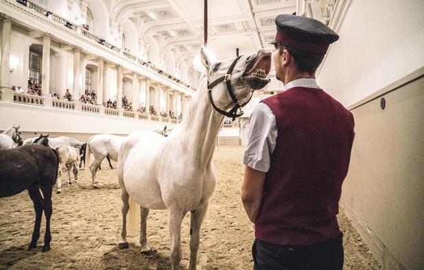 Paardenpraatjes