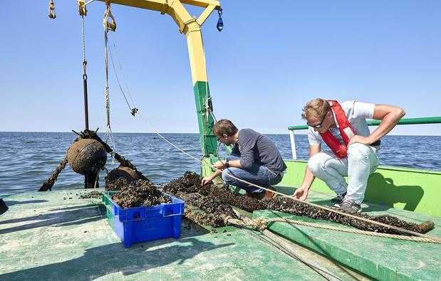 Visserijrapport bevestigt: mosselboerderij van Colruyt nadelig voor visserij