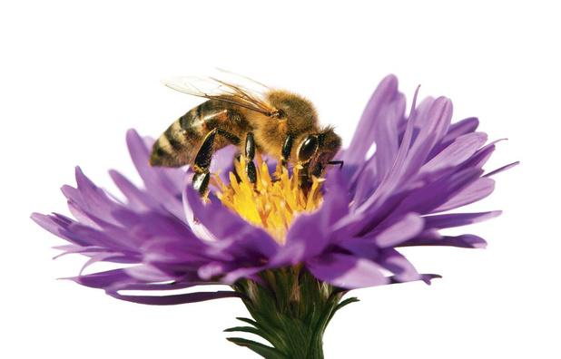 """En mai, tonte à l'arrêt: """"Une stratégie manque pour sauver les pollinisateurs"""""""