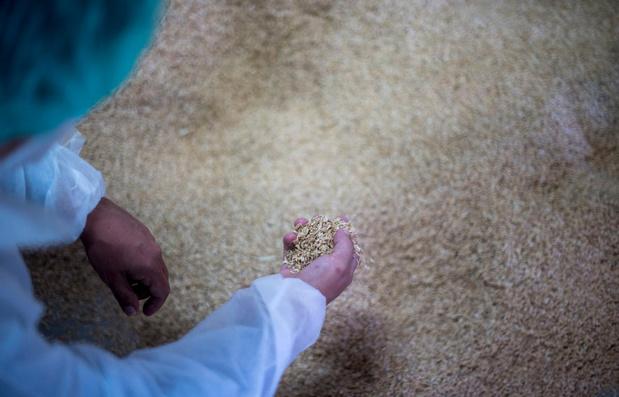 Seat veut fabriquer des pièces à partir de riz