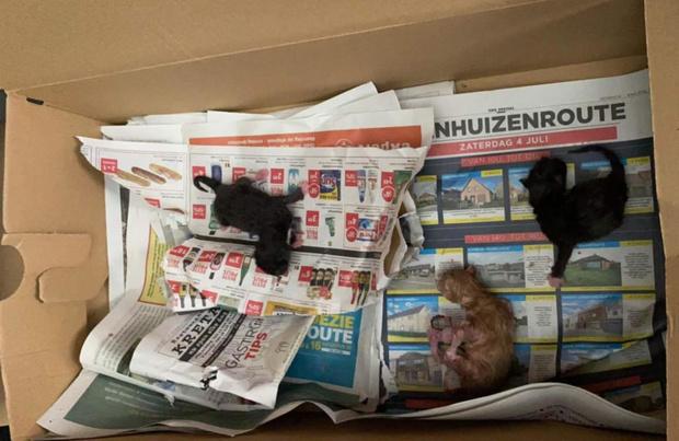 Pasgeboren kittens harteloos gedumpt in kartonnen doos op straat