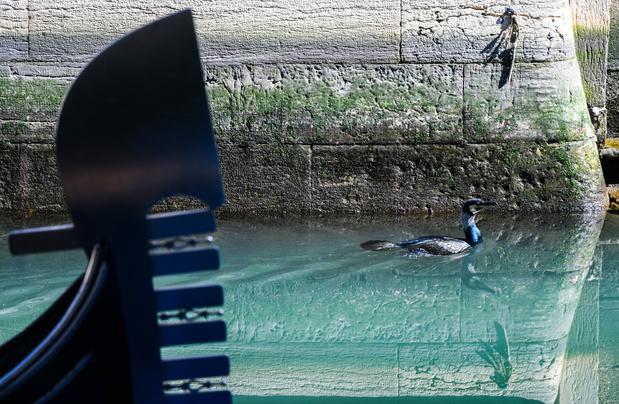 De kanalen in Venetië schoner dan ooit