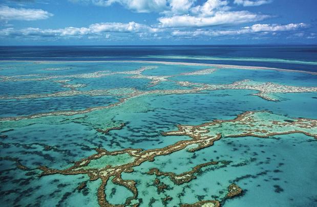 La Grande Barrière de corail sanctionnée?