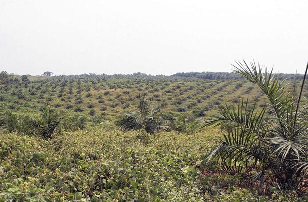 Coopération: plantage dans les plantations