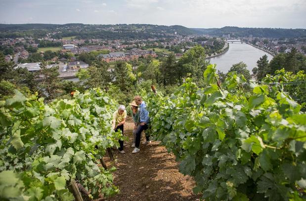 Bières, vins & co : faites le plein de saveurs cet été en Wallonie !
