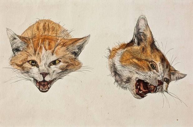 Expo: van kattenkwaad naar poeslief