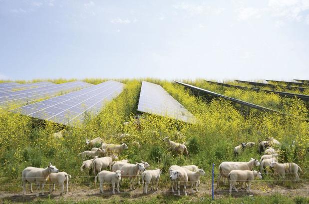 Beleg groen, alleen al voor de poen: duurzaamheid domineert het komende decennium op de beurs