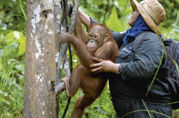 [À la télé ce soir] Sauveurs d'espèces. Un espoir pour notre planète