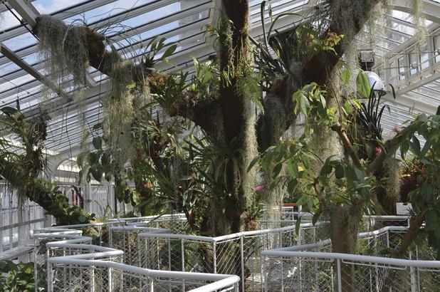 Le Jardin botanique de Meise, inespérément apaisé