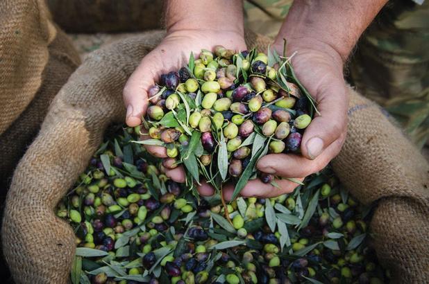 L'huile d'olive, une denrée ancestrale à déguster comme un bon vin