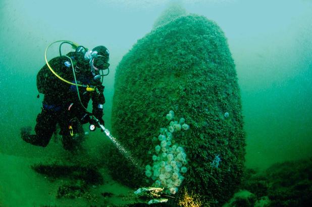 Patrimoine: longue vie aux épaves de la mer du Nord