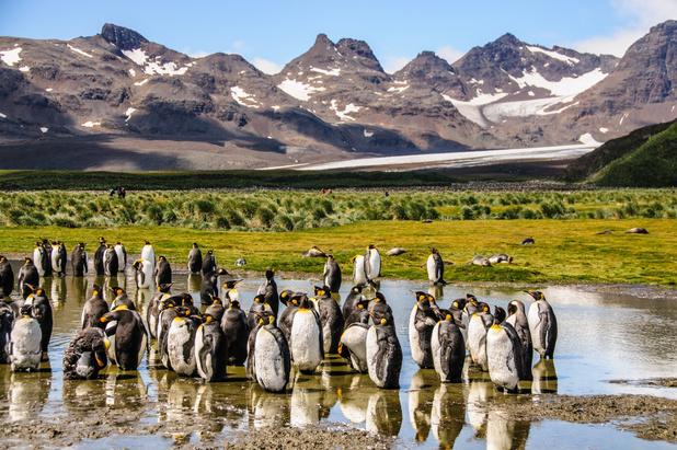 Enorme ijsberg bedreigt pinguïns en zeehonden op South Georgia in de Zuid-Atlantische oceaan