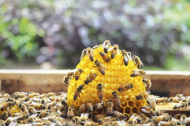 Färm Sainte-Catherine se joint à Sauvons Maya à l'occasion de la journée mondiale des abeilles