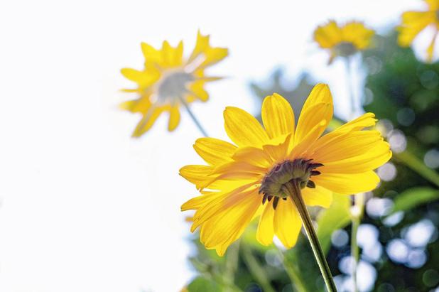 Vijf voor twaalf voor medicinale planten