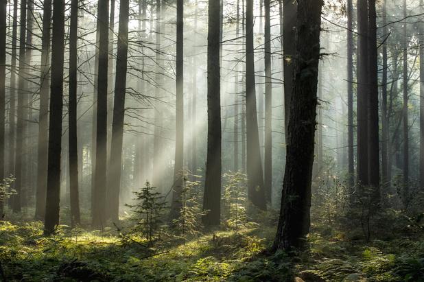 Bossen zijn warmer in de winter en koeler in de zomer