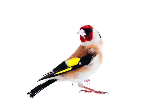 Vogels van dichtbij: een prachtige ode aan vogels