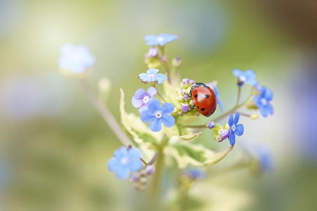 Meer leven in de tuin: zo creëer je een fijne thuis voor insecten