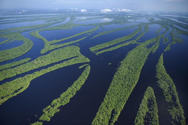 Amazonewoud kan binnen vijftig jaar verdwenen zijn