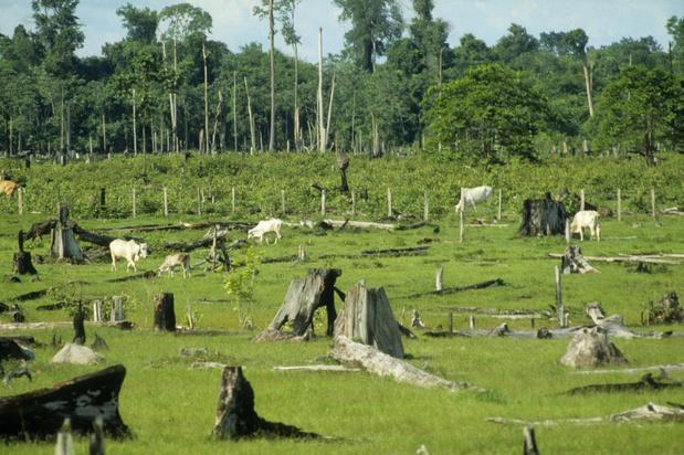 Commerciële landbouw belangrijkste factor voor verwoesting tropisch regenwoud