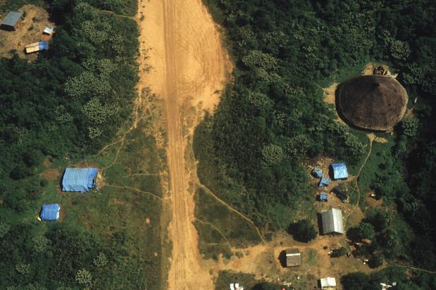 Grote bouwprojecten bedreigen het voortbestaan van cruciale bossen