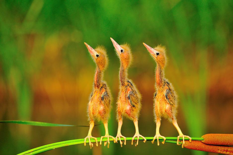 In beeld: de kanshebbers op de 'Bird Photographer of the Year' titel