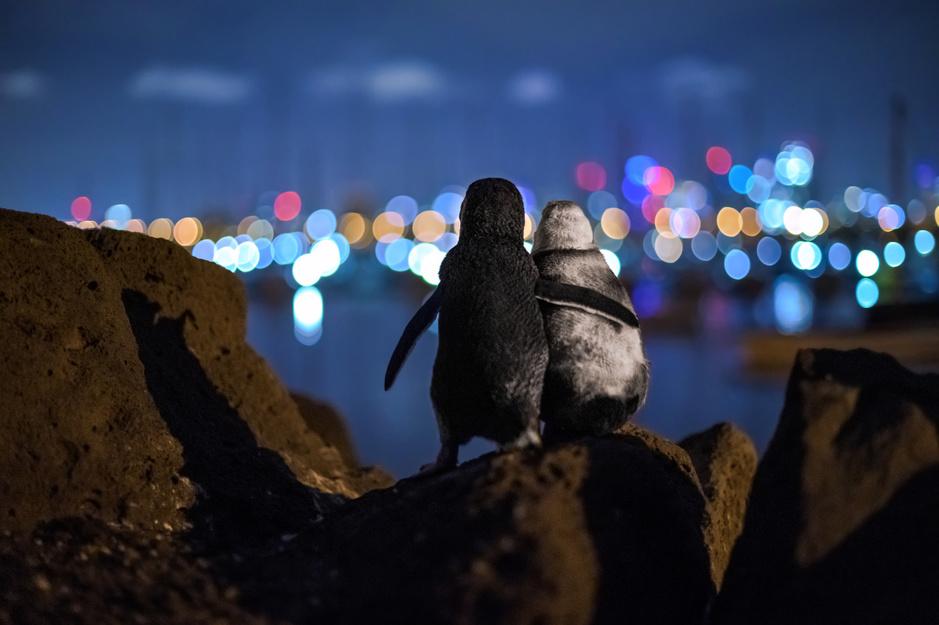 De winnaars van de Ocean Photography Awards: een intiem inkijkje in het leven in de oceanen