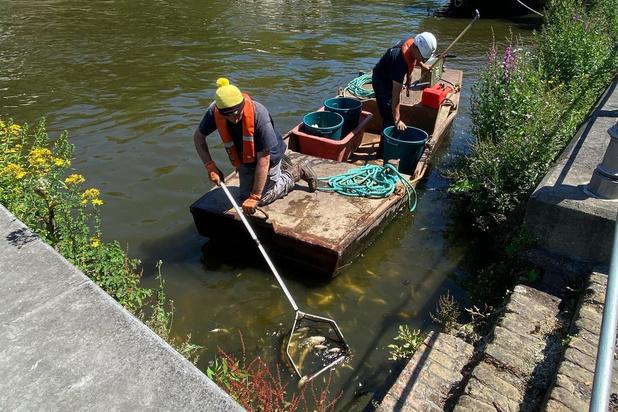 Verantwoordelijken vissterfte Ringvaart Brugge bekend bij politie