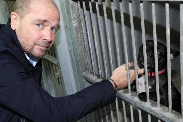 Dierenwelzijn en asiel in de clinch om 19 hondjes in Oostende
