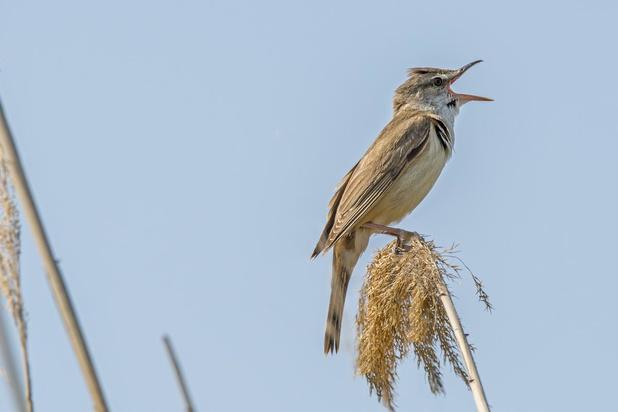 West-Vlaamse vogelaars spotten liefst 197 soorten op eerste 'Birdathon'