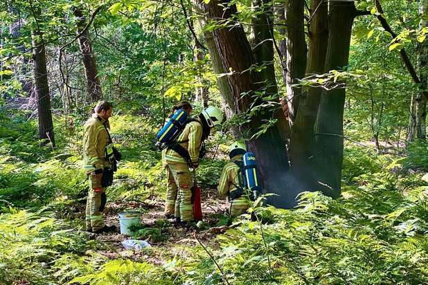 Beginnende brand in Ryckeveldebos
