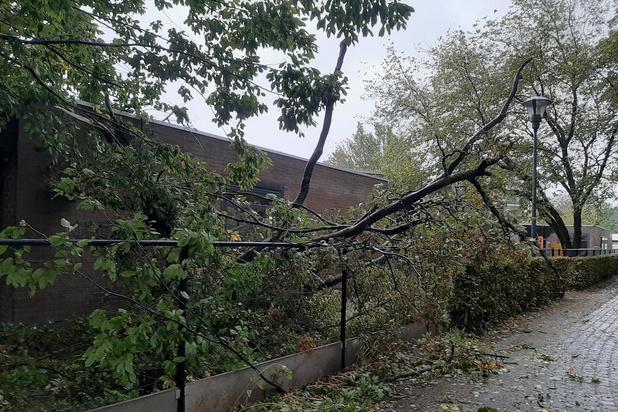 Boom kraakt rakelings langs basisschool Beukenhove