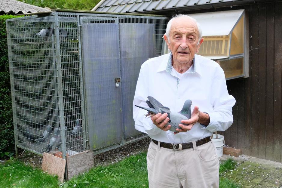 """Gilbert (91) stopt na 75 jaar met het spelen met de duiven: """"Hopelijk kan dit een volkssport blijven"""""""