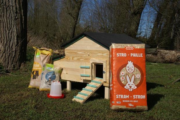 Kippen in je eigen tuin houden via het Start to kip-pakket
