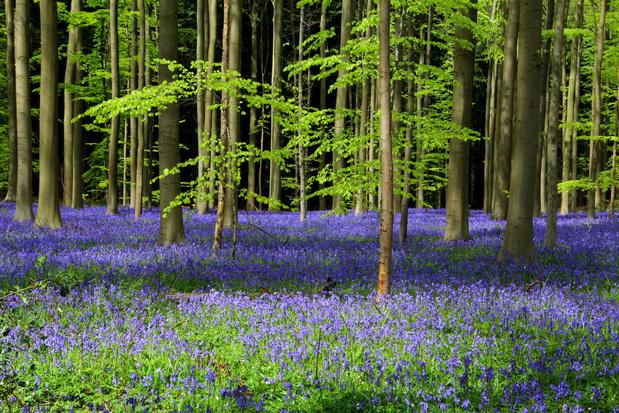 Vlaamse regering trekt 16 miljoen euro extra uit voor gemeenten met bebossingsplannen