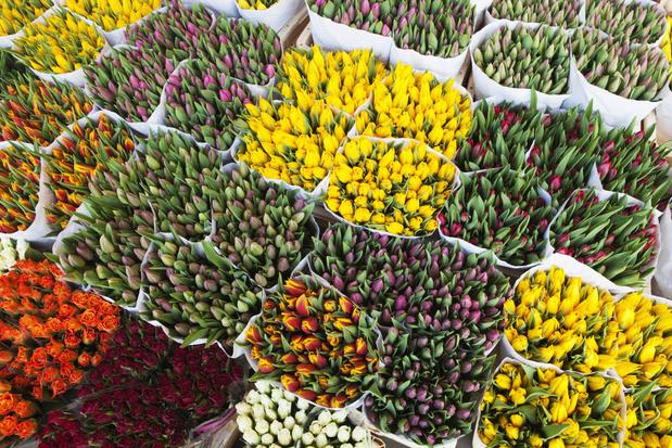Amsterdam maakt zich zorgen over zijn tulpen