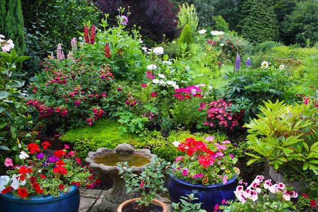 Te heet in uw tuin? 5 tips voor een verkoelende klimaattuin