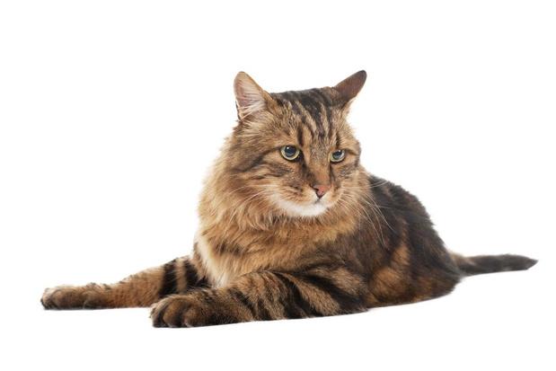 Kat met cataract