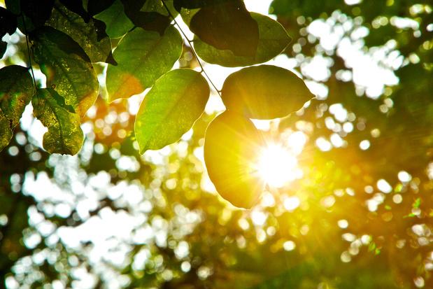 'De halve westerse samenleving schijnt een gebrek aan vitamine D te hebben'