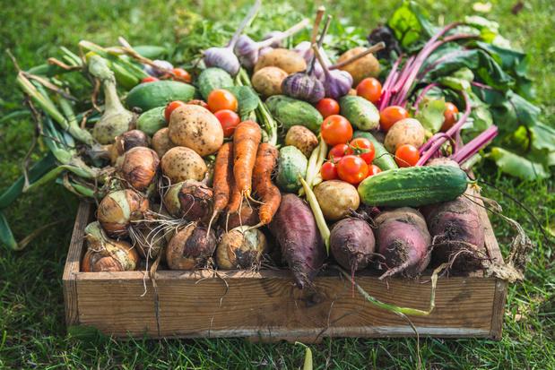 'Waarom lokale landbouw en uw moestuin niet volstaan'