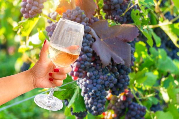 Bang van natuurwijn? Wilde wijnen kun je leren appreciëren