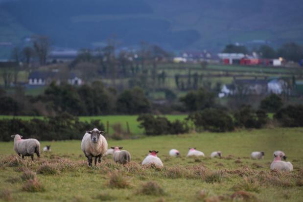 Ierland versterkt politieaanwezigheid aan grens met Verenigd Koninkrijk