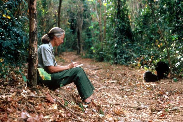 Jane Goodall krijgt eredoctoraat van UHasselt