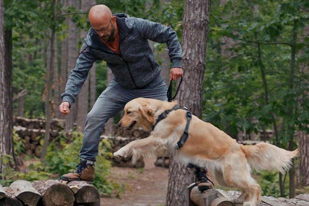 Nieuwe campagne 'honden aan de leiband'