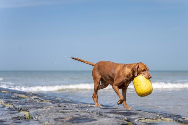 Redders kunnen ook honden redden in Middelkerke
