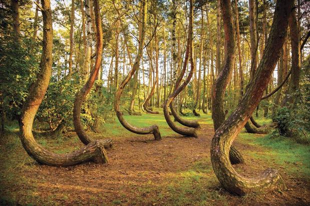 Les cinq forêts les plus fascinantes du monde et leur mystère